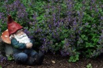 Gnome napping in a catnip patch.